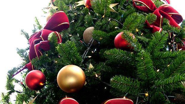Jard n bot nico universitario recibir rboles de navidad - O arbol de navidad ...