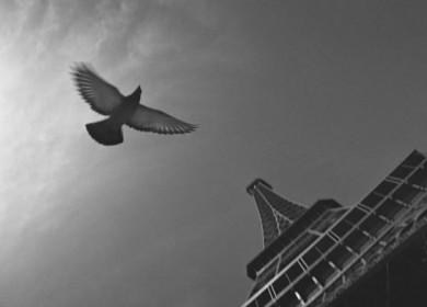 slide-palomas