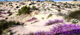 desierto-de-altar